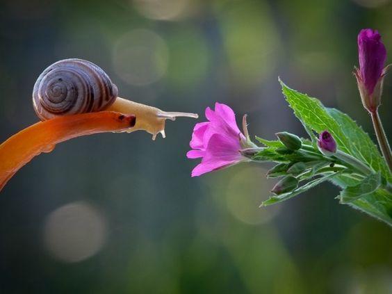 L'escargot et la fleur 2