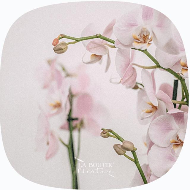 Orchidée grandes occasion à La Boutik Creative